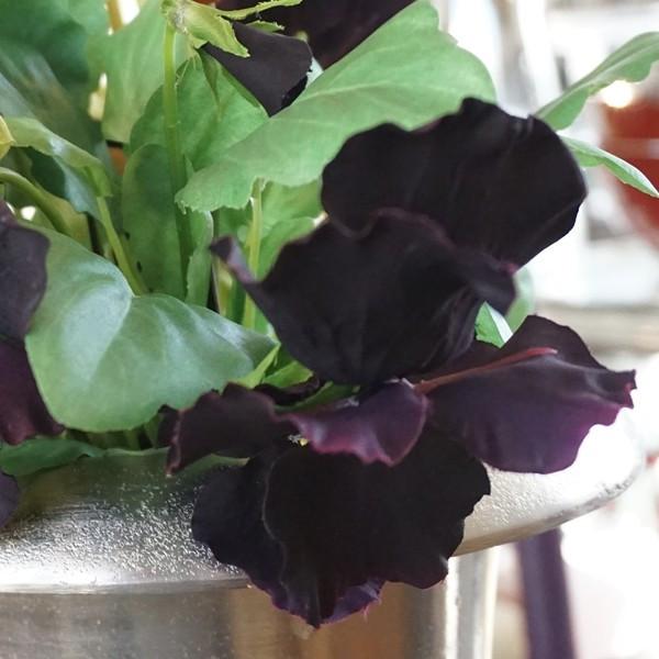 造花 ビオラ ブラック01