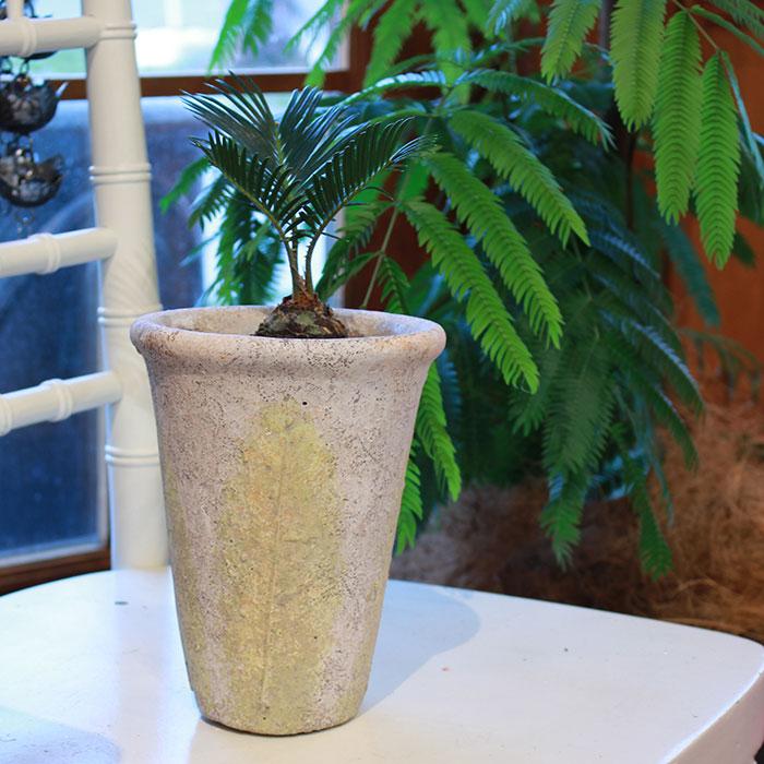 JAIリーフ 鉢カバー Mサイズ ナチュラル セメント  観葉植物 リーフ柄10