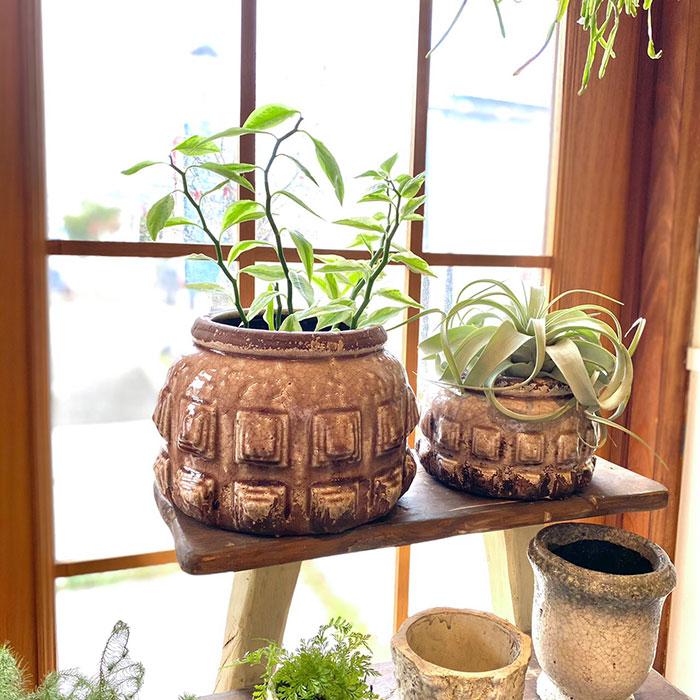 LIVY 鉢カバー Sサイズ ピンク 陶器  観葉植物 アンティーク調10