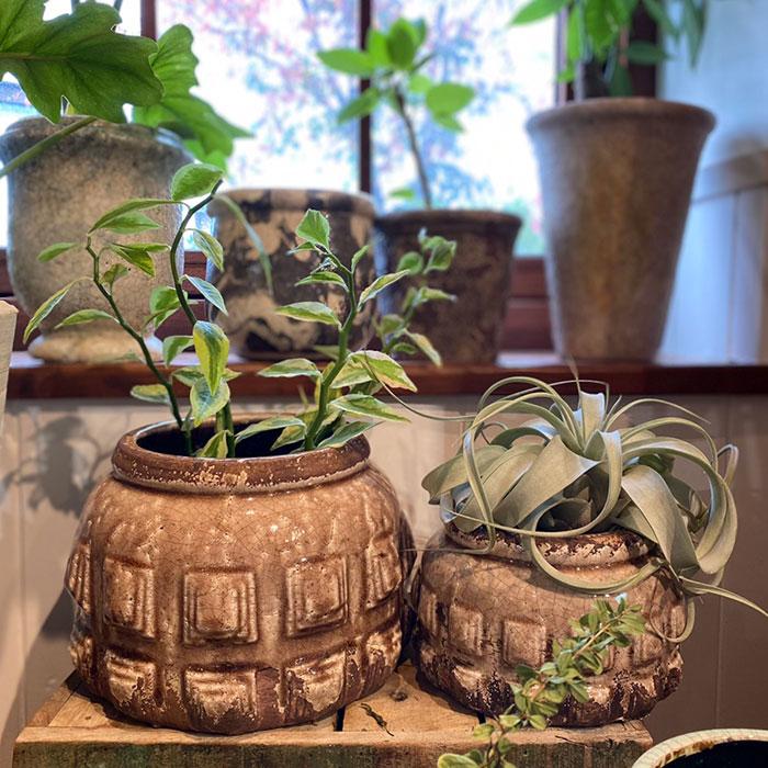 LIVY 鉢カバー Sサイズ ピンク 陶器  観葉植物 アンティーク調09