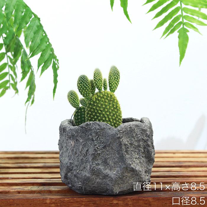 SCAR 鉢カバー XSサイズ グレー セメント  鉢カバー 観葉植物
