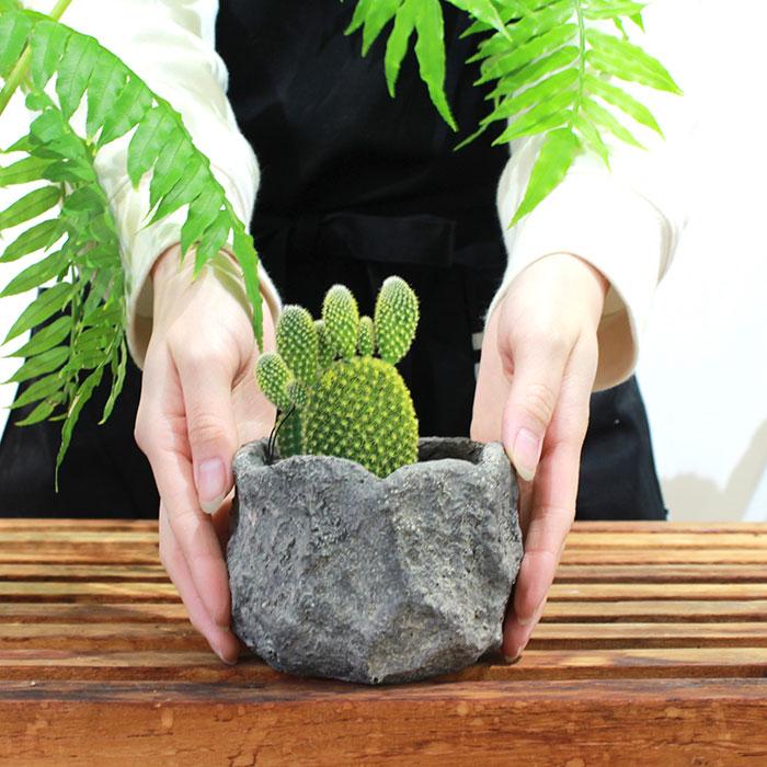 SCAR 鉢カバー XSサイズ グレー セメント  鉢カバー 観葉植物01