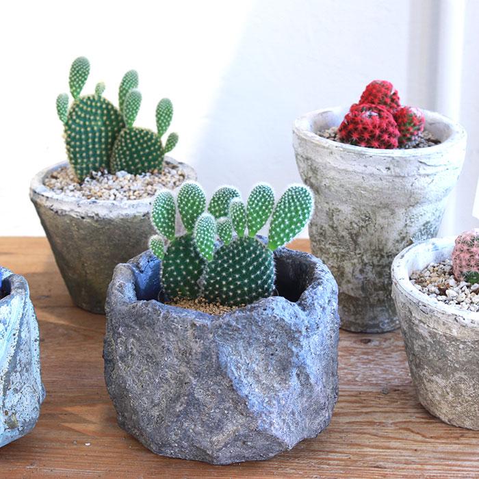 SCAR 鉢カバー XSサイズ グレー セメント  鉢カバー 観葉植物04