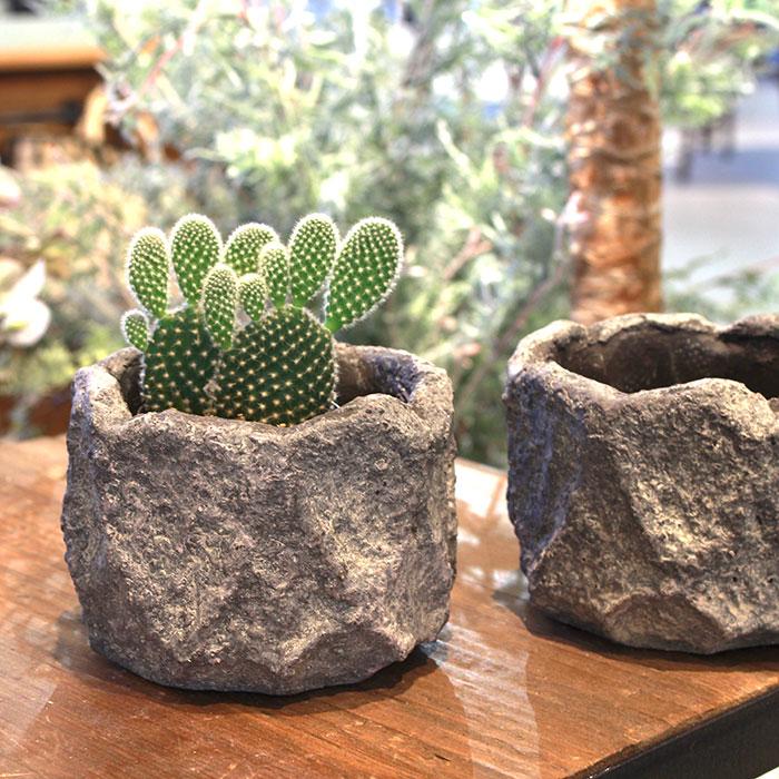 SCAR 鉢カバー XSサイズ グレー セメント  鉢カバー 観葉植物06