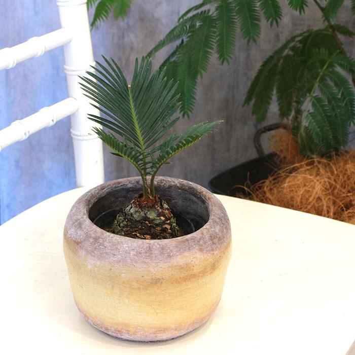 ALY 鉢カバー Mサイズ イエロー 陶器  鉢カバー 観葉植物07