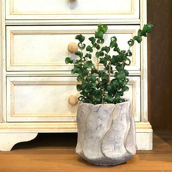 DEC PINK  鉢カバー Lサイズ PINK セメント ラウンド型  鉢カバー 観葉植物10