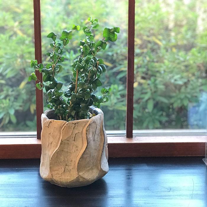 DEC PINK  鉢カバー Lサイズ PINK セメント ラウンド型  鉢カバー 観葉植物12