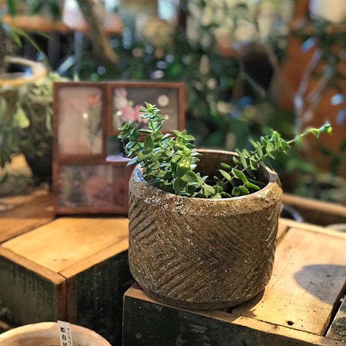 LAW 鉢カバー Mサイズ オレンジ セメント ラウンド型  鉢カバー 観葉植物05