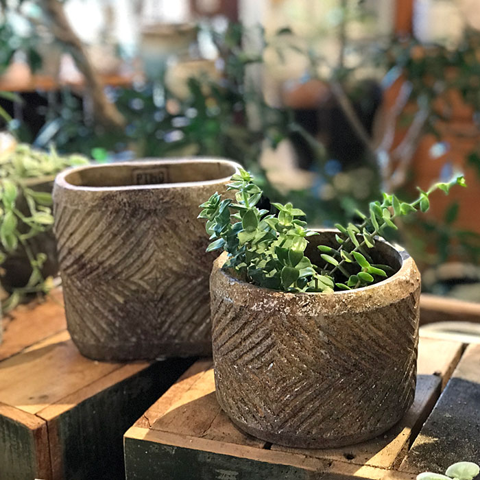 LAW 鉢カバー Sサイズ オーバル型 セメント オレンジ  鉢カバー 観葉植物11