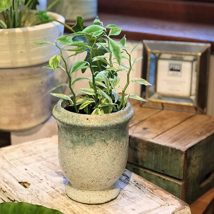 MELS 鉢カバー Sサイズ  陶器  鉢カバー 観葉植物  07
